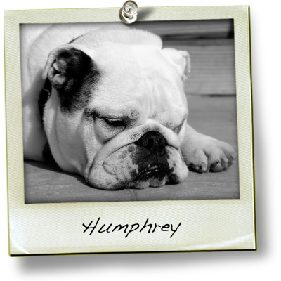 Chubster Humphrey